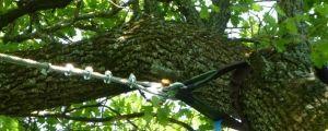 Sistema de sustentación de árboles