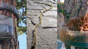Control de Plagas: La Oruga Procesionaria del Pino y la Colmena; la Avispa y/o el Avispón