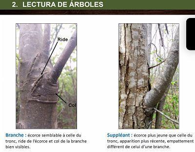 diferencias entre rama y suplente