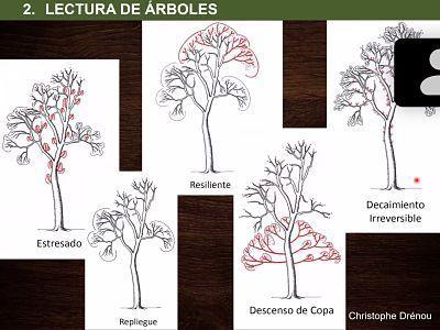 estado fisiologico del arbol