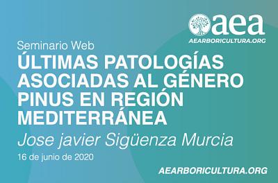Patologias asociadas al genero pinus en la region mediterranea