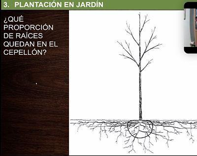 proceso de plantacion. el hoyo de plantacion