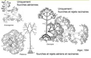 arquitectura radical y aerea