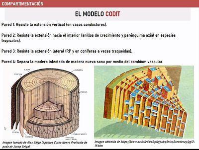 modelo CODIT