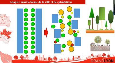 plan canopee 02