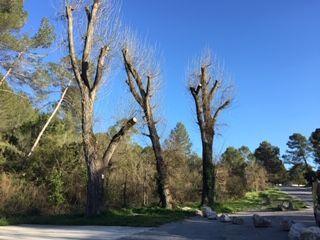 mutilacion en distintas especies arboreas
